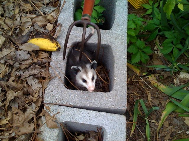 Do Not Fear This Wild Baby Is In No Danger I Promise You The Prongs Of Kids Garden Rake Are Securely At Rest Over Hole Cinder Block
