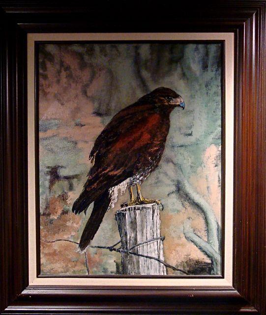 Hawk-Oleta-frame-2