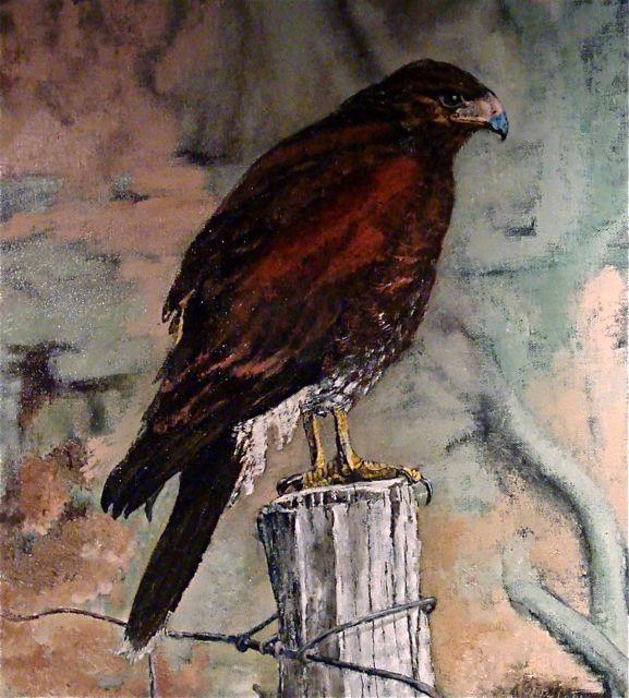Hawk-Oleta-noframe-2