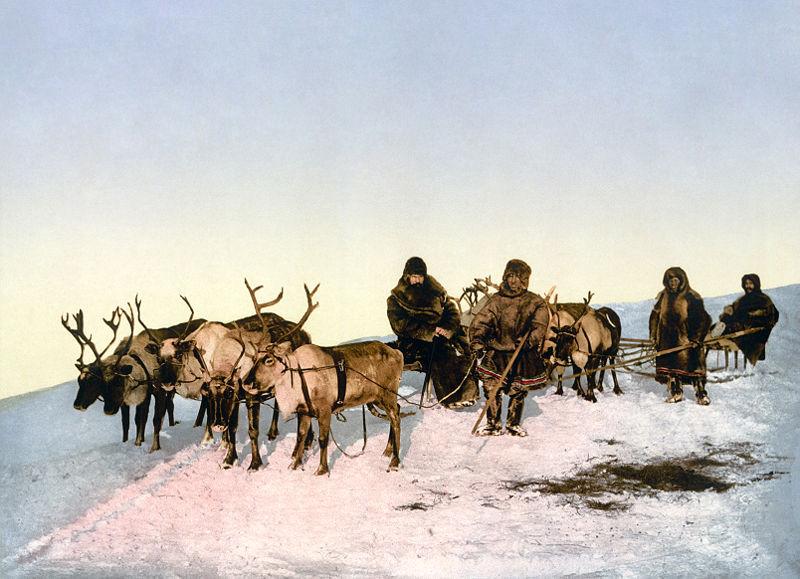 800px-Archangel_reindeer3