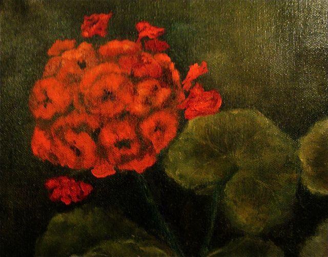 Geraniums-Oleta-petals