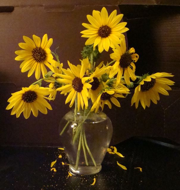 Sunflowers in clear vase2_2_2