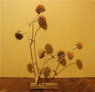 Sunflowers-seedpods