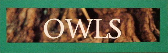 Secretscrap-OWLS-words